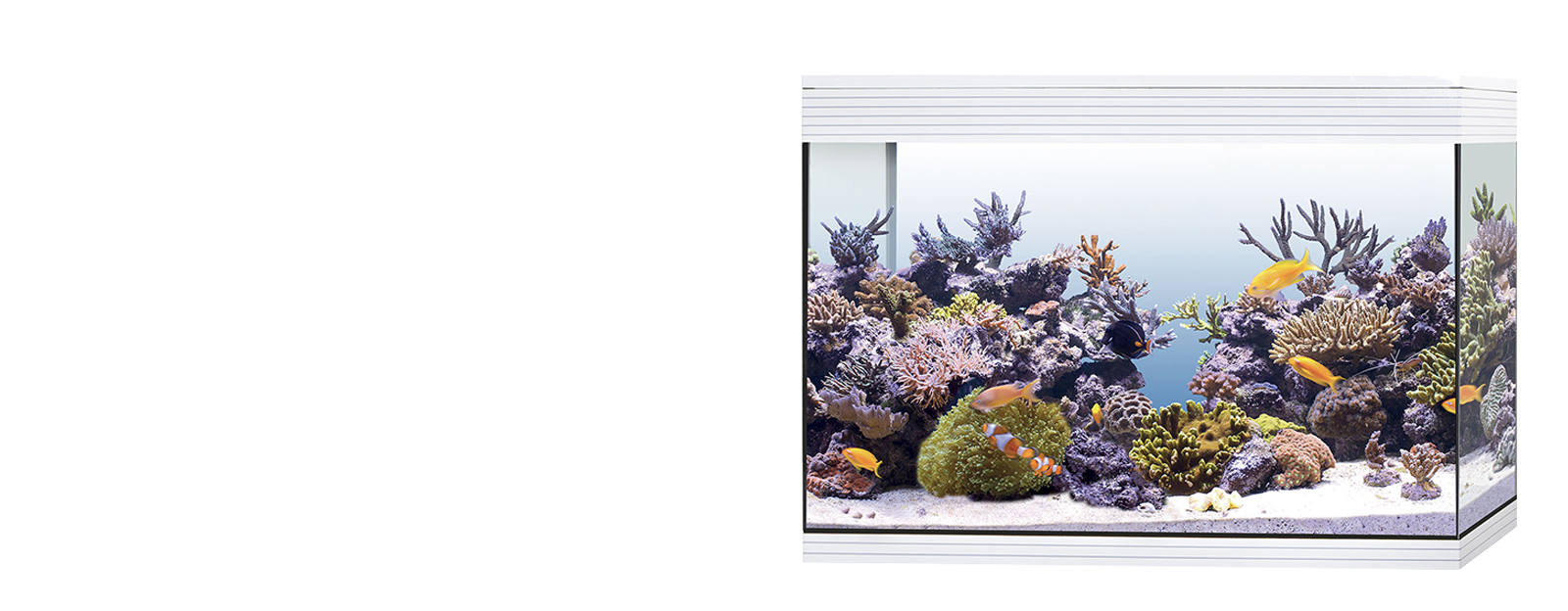 PURE MARINE XL-HC LED