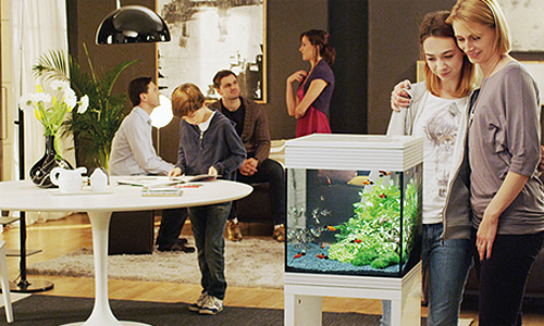 Your first aquarium: 4 things to know before starting out