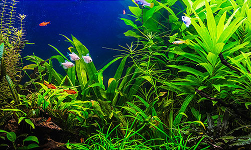 An aquarium as an ecosystem
