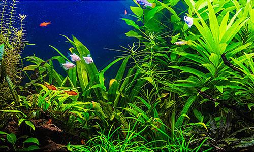 An aquarium as an ecosystem