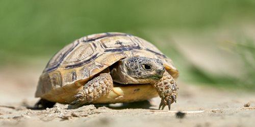 Il risveglio delle tartarughe di terra