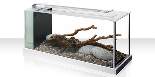 FLUVAL SPEC Mini acquario per sguardi lunghi e contemplativi