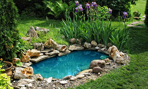 A garden pond: a dream come true